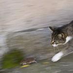 Die Katze geht jagen